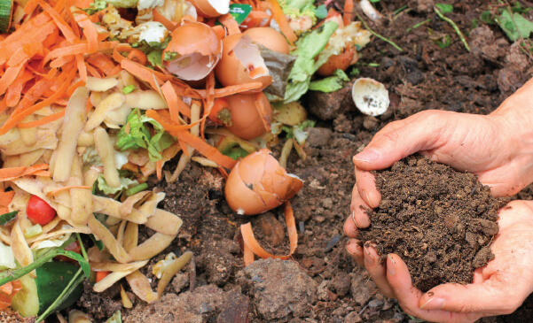 Compost from Bengaluru's wet waste brings relief to farmers