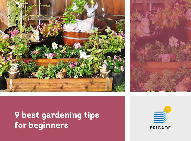 9 best gardening tips for beginners