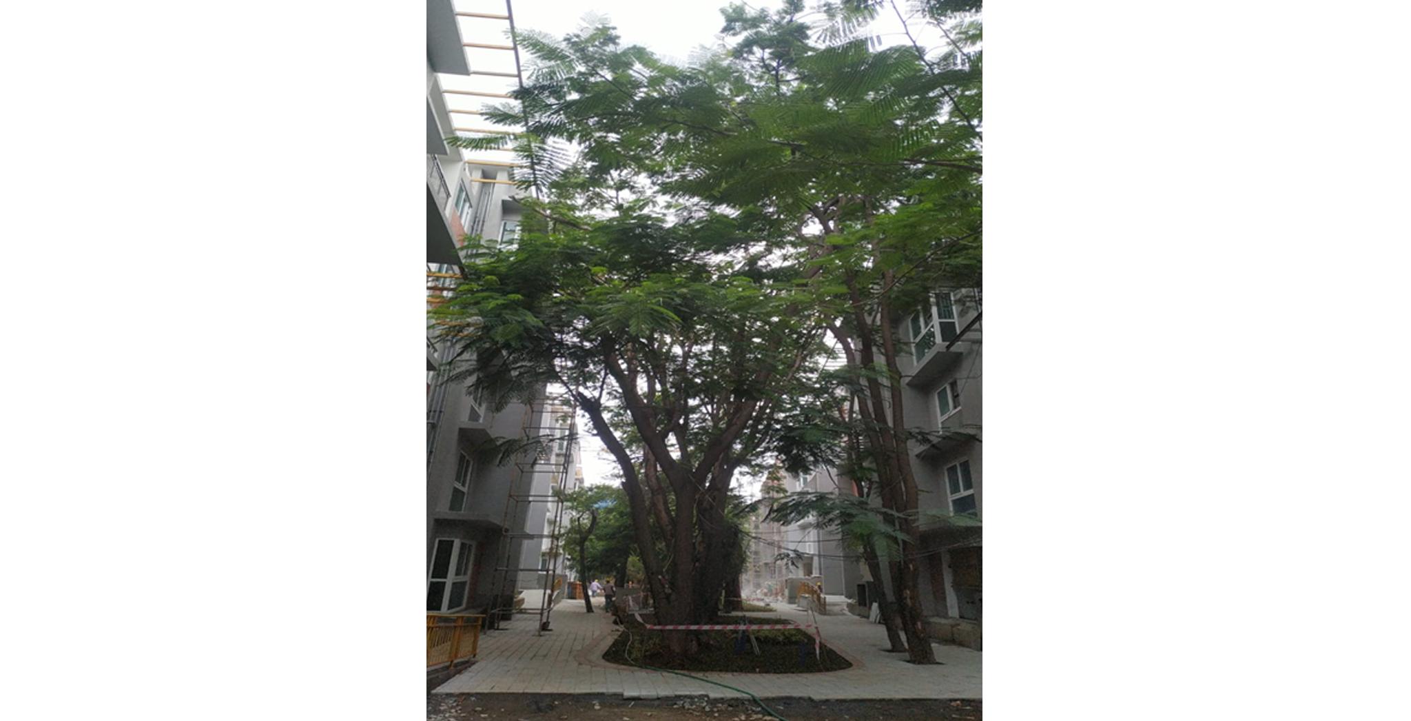 Aug 2021 - External development: Central Courtyard landscaping work